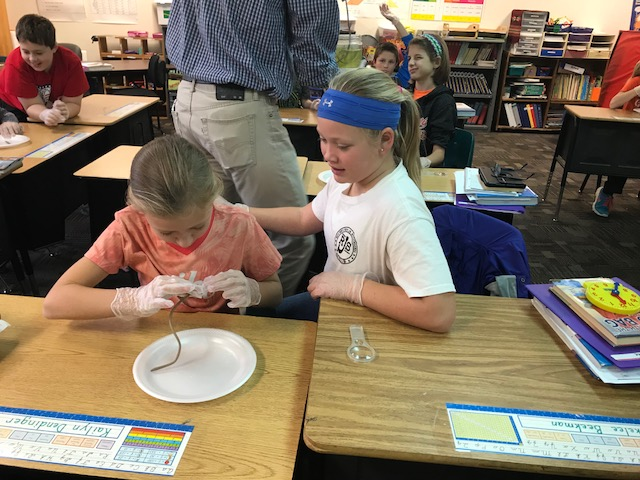 pictures of fourth grade worm dissections